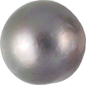 Perles de la mer de Cortez